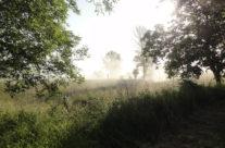 Brume d'été dans le pré