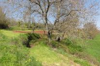 Chemin de Ségézy au printemps